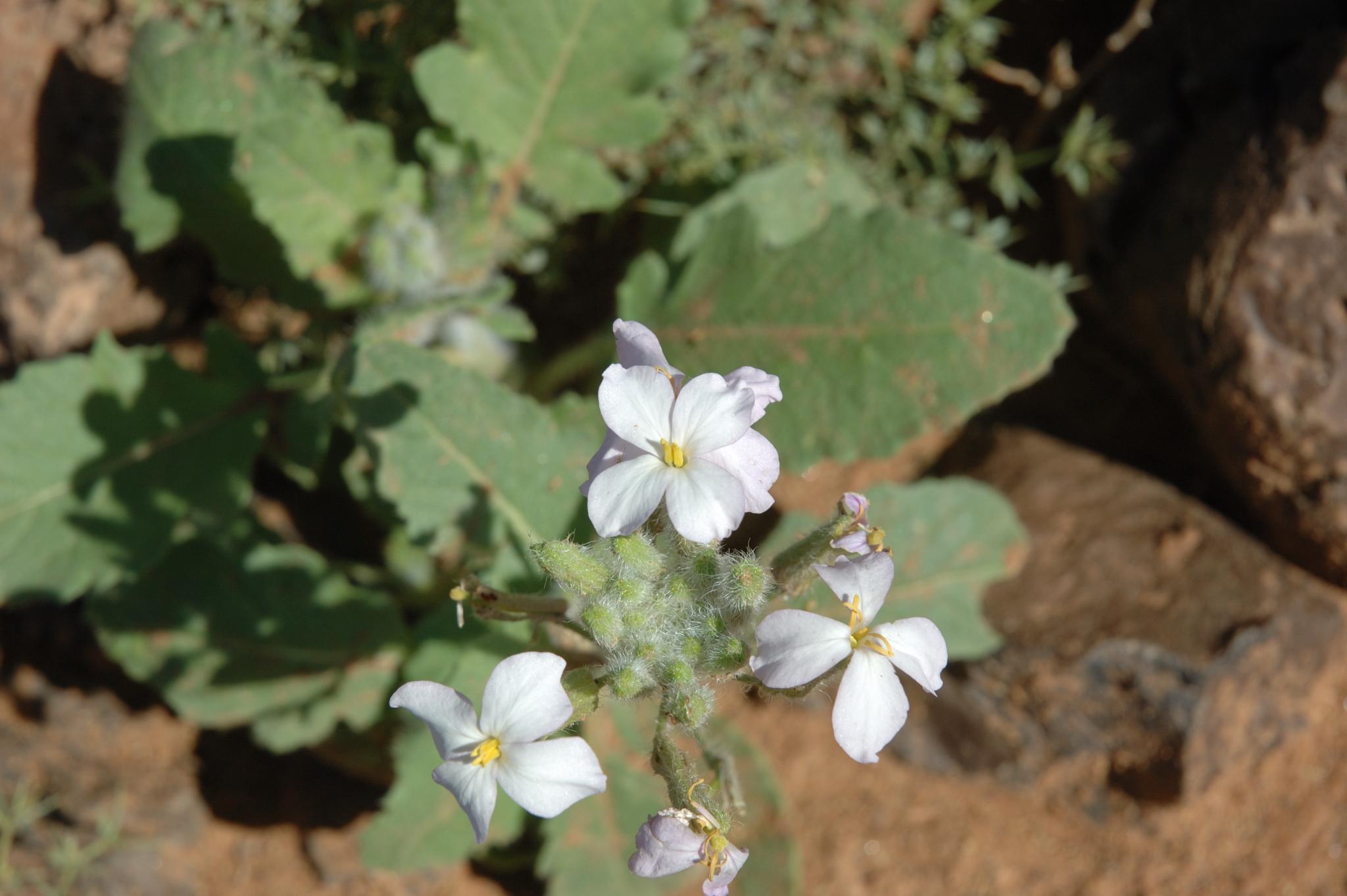 Pflanzen11