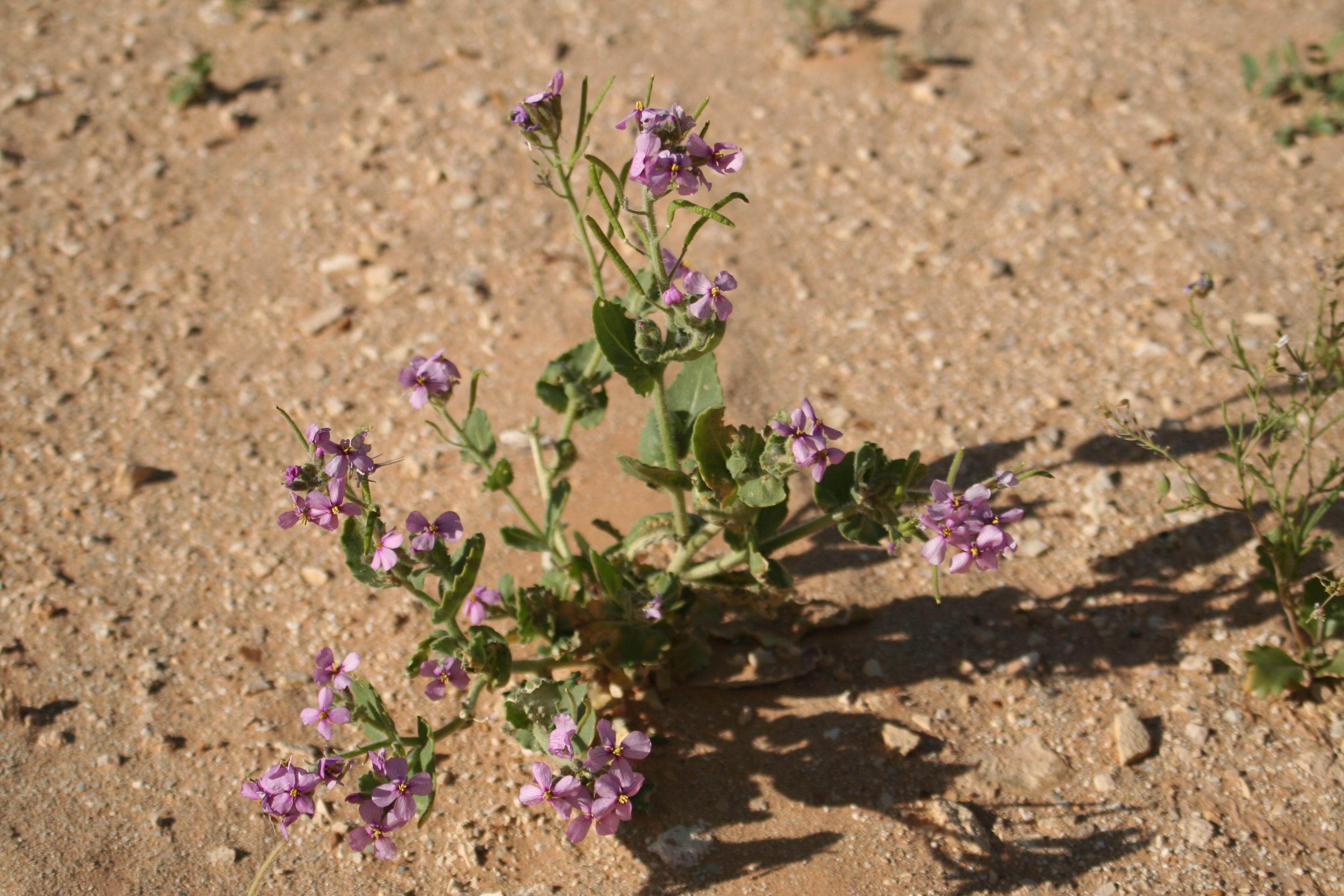 Pflanzen29