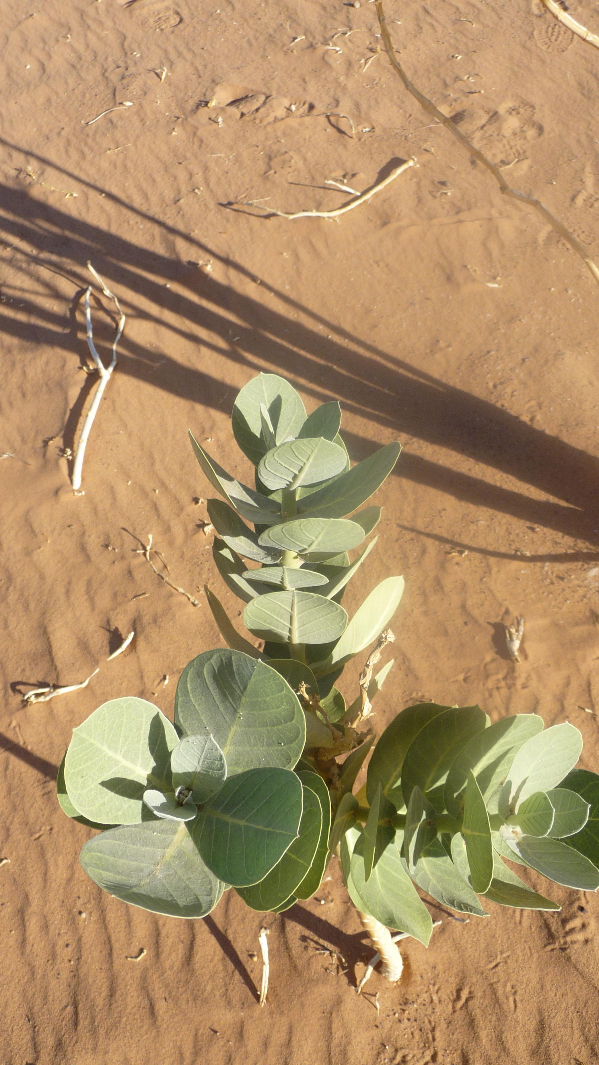 Pflanzen54