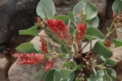 Pflanzen18