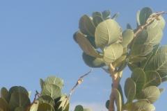 Pflanzen52