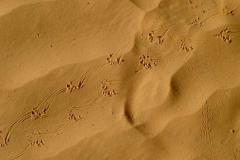 Baerenspuren_ im_ Sand